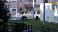 Marmaris_excursions_front_park
