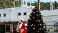 Christmas Tree Marmaris E1514122612162