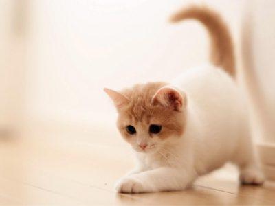 Marmaris Kitty Kat Club