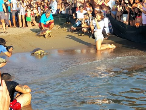 Caretta Caretta back to sea