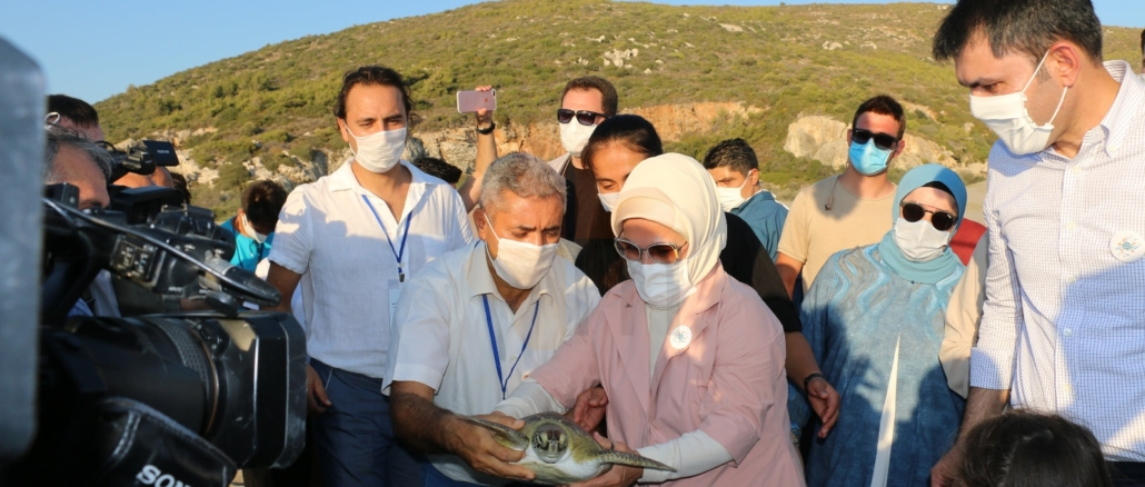 Sea Turtles Conservation and Monitoring Project