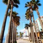 Marmaris Palm Trees